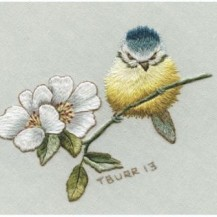 blue tit and antique rose